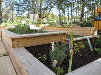 Garden IMG_1389