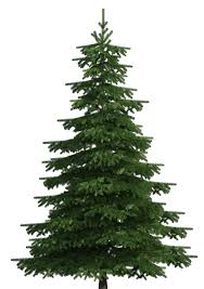 Christmas Trees to Benefit PS 321