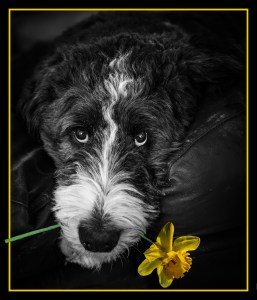 'Please Don't Eat The Daffodils'