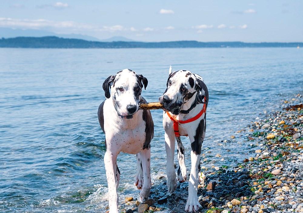 psy podczać wakacji