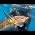 """Freeze…Put your """"flaps"""" in the air… (spearfishing – Pescasub – Ψαροντούφεκο)"""