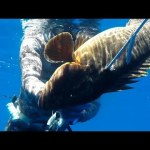 No time for caution for the grouper – 42m  (spearfishing – pescasub – ψαροντούφεκο)