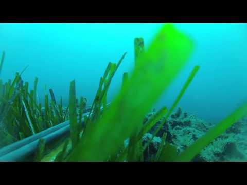 Spearfishing - Ψαροντούφεκο Σαργοί