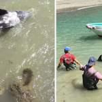 Δελφίνι πέφτει στα βράχια για να γλιτώσει από τους διώκτες του