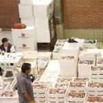 Τέλος στη διακίνηση και εμπορία ειδών καρχαριών και σελαχιών