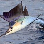 Κίνδυνος επιβολής ποσοστώσεων στην Κύπρο για το ψάρεμα ξιφία