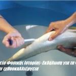 Μουσείο Φυσικής Ιστορίας- Εκδήλωση για τα ψάρια και την ιχθυοκαλλιέργεια