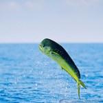 Το ψάρεμα των κυνηγών