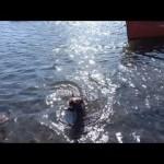Spinning  με τον Σώτο: Σαργος και ο Σιμπα
