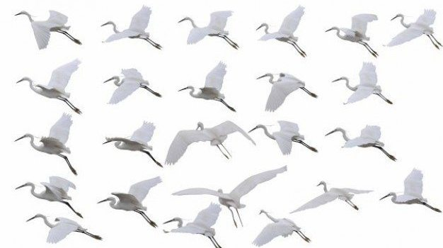 kinds of flying crane psd layered material