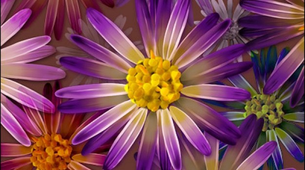 large ultra clear flower theme layered psd