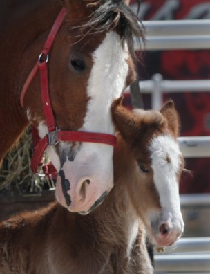Marge with her mare. The babies are given a name with the same first letter as their mom.