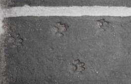 I don't know exactly what the material for the steps is, but there are animal tracks in some of them.