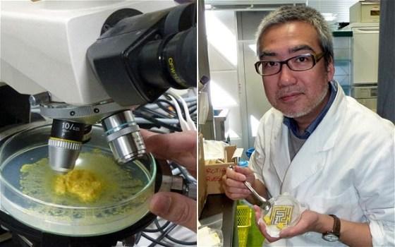 Toshiyuki Nakagaki, professor of Future University Hakodate Photo: SHINGO ITO/AFP/Getty Images