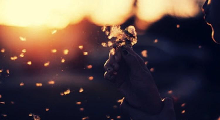 valores, tranquilidade, respeito, por do sol, educação