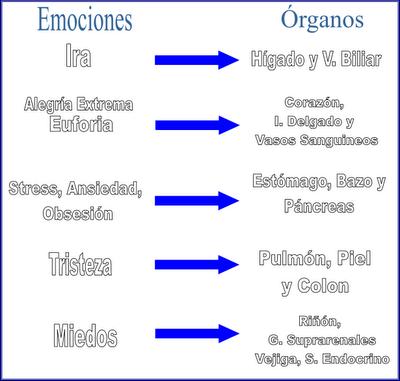 cd55d-emocionesorganos