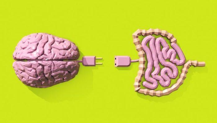 cerebro-intestino-786x445