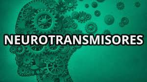 neurotransmisores  4