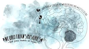 neurotransmisores  5