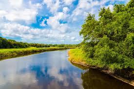 Paisagem Natural Do Verão Com Rio Pantanal Em Florida, EUA Imagem ...