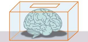 Diferencias cerebrales según la ideología política