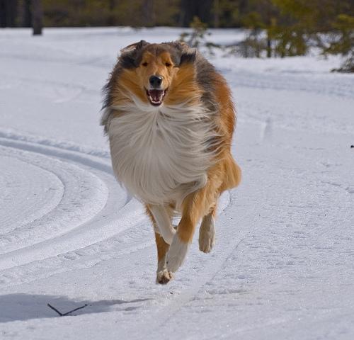 Corriendo sin descanso