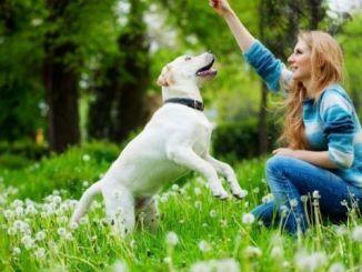 Las Ventajas Emocionales de Tener Mascota
