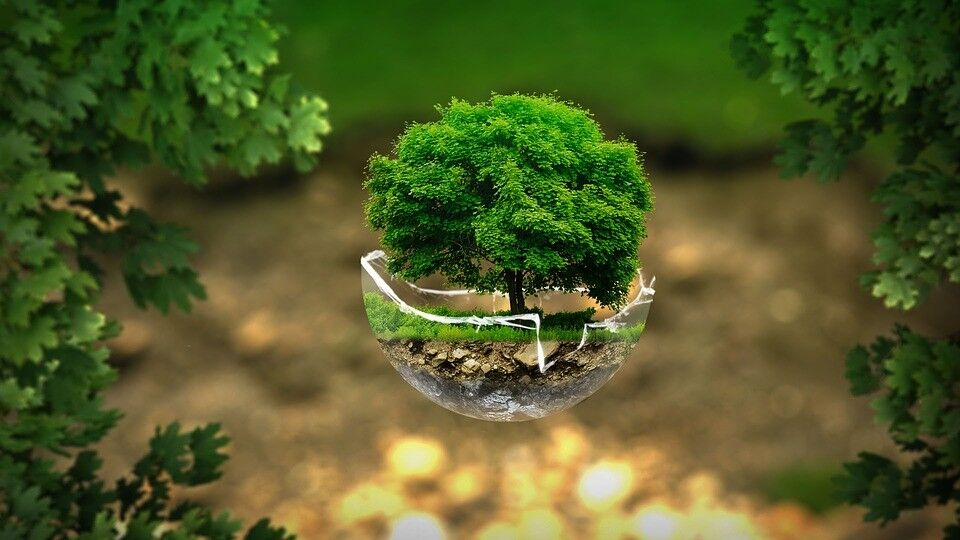 Psicología de la conservación
