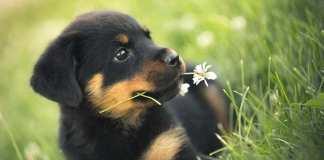 štene za društvo