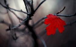 Осенняя хандра, причины и как избавиться от нее