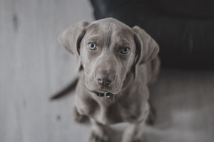 ¿Cómo Superar la Pérdida de una Mascota?