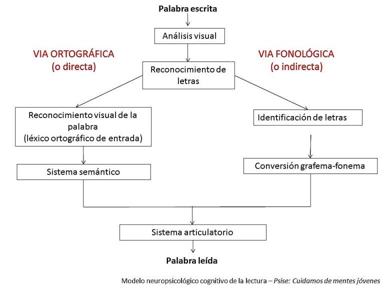 4_modelo neuropsicológico cognitivo de la lectura