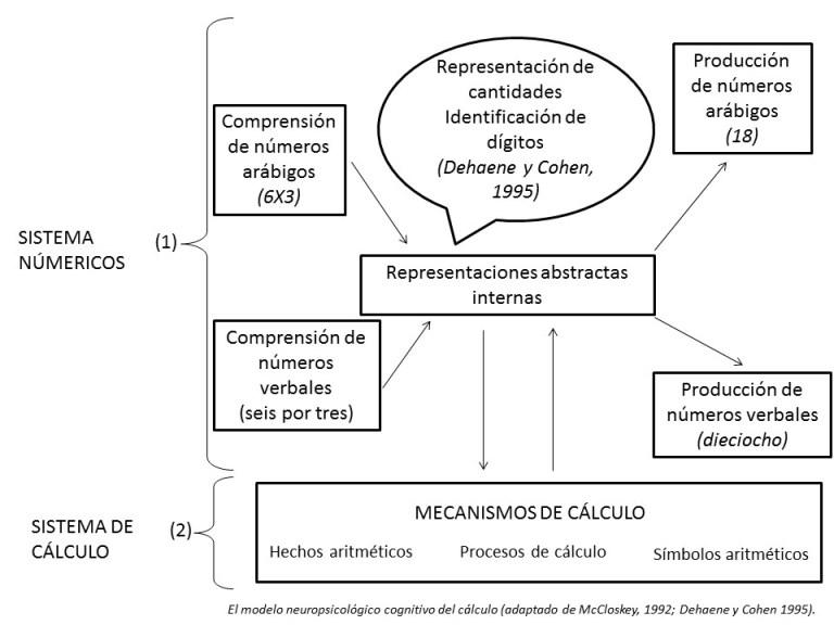 El modelo neuropsicológico cognitivo del cálculo