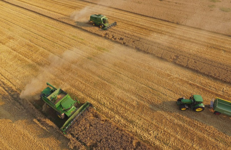 In this aerial view, combines harvest summer wheat at a cooperative farm on August 14th, 2015, near Grossderschau, Germany.