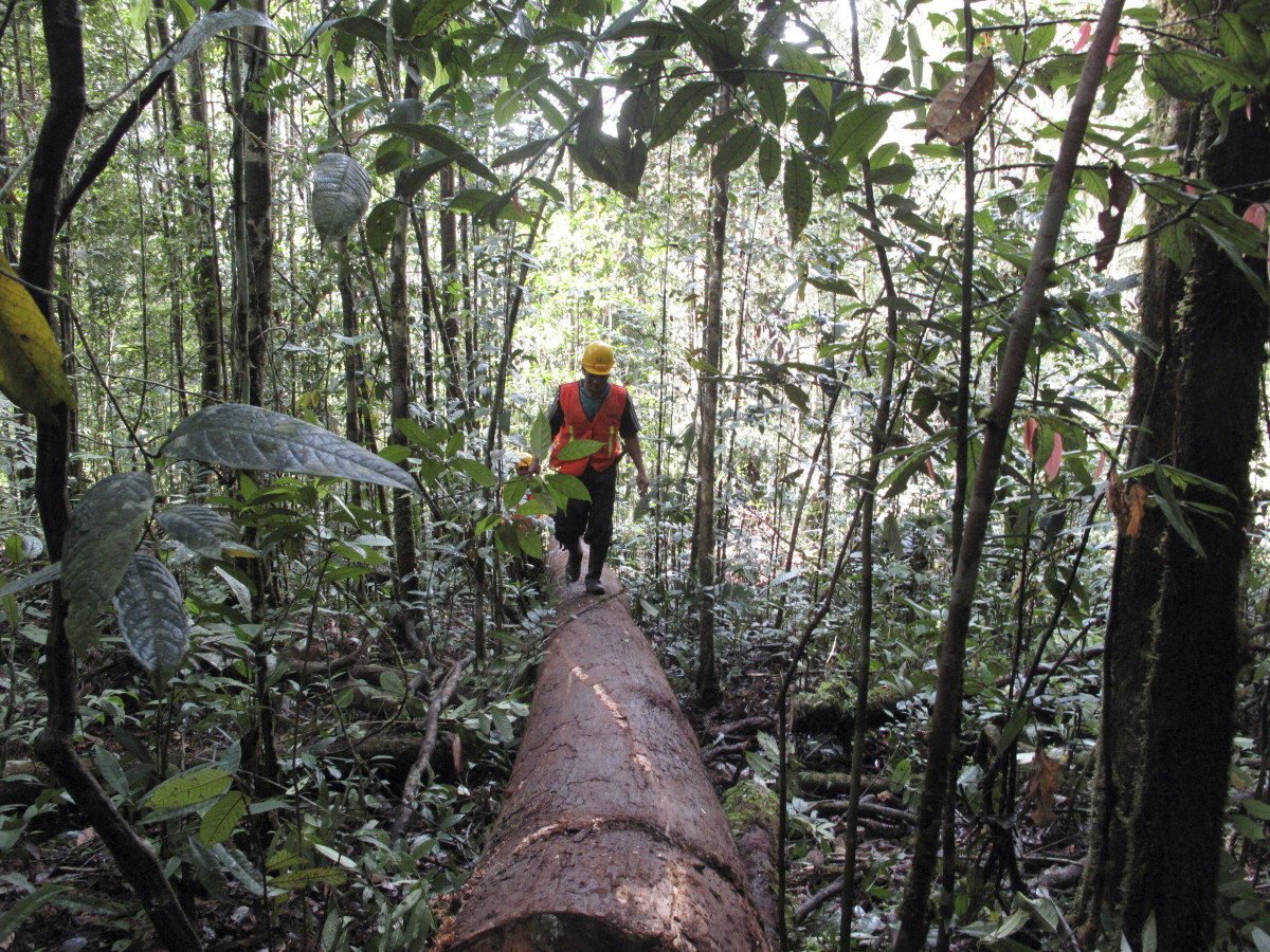 Timber Companies Have the Opportunity to Protect Forests Long Term -  Pacific Standard