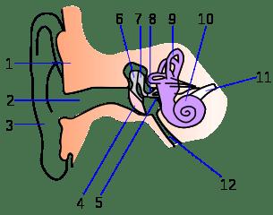 Шум - човешко ухо