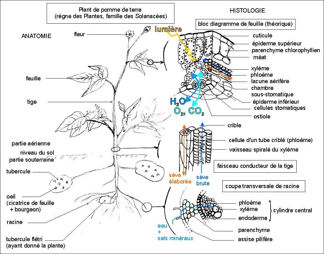 Diversite Et Complementarite Des Metabolismes