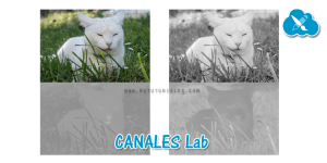 canales Lab