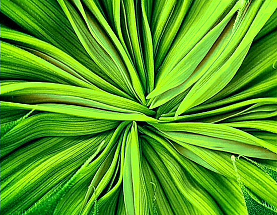 Зеленый цвет - ПСИХОЛОГИЯ ЦВЕТА