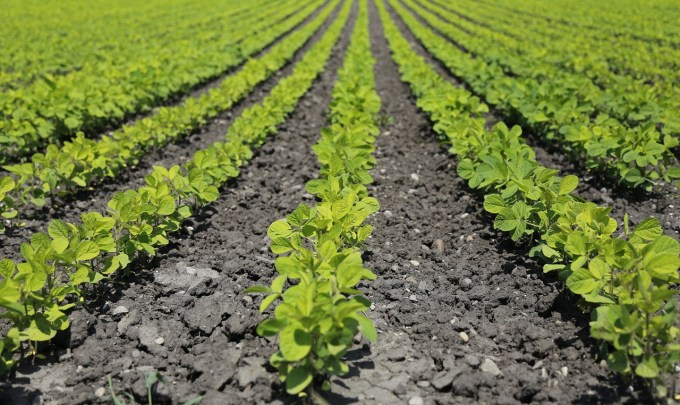 Feeding the World With Higher Yielding Crops