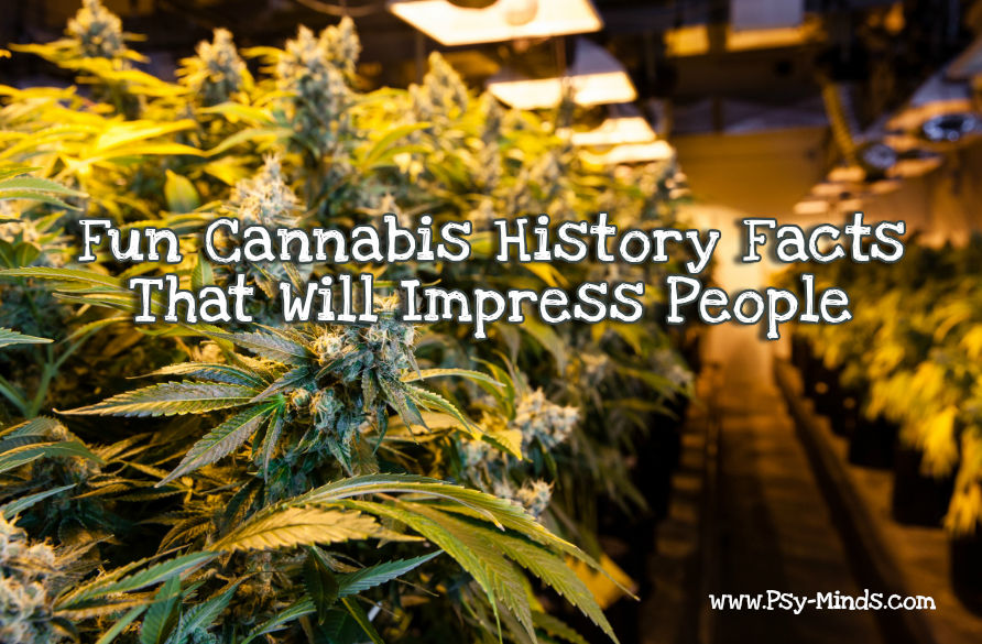 Cannabis History Facts Impress People