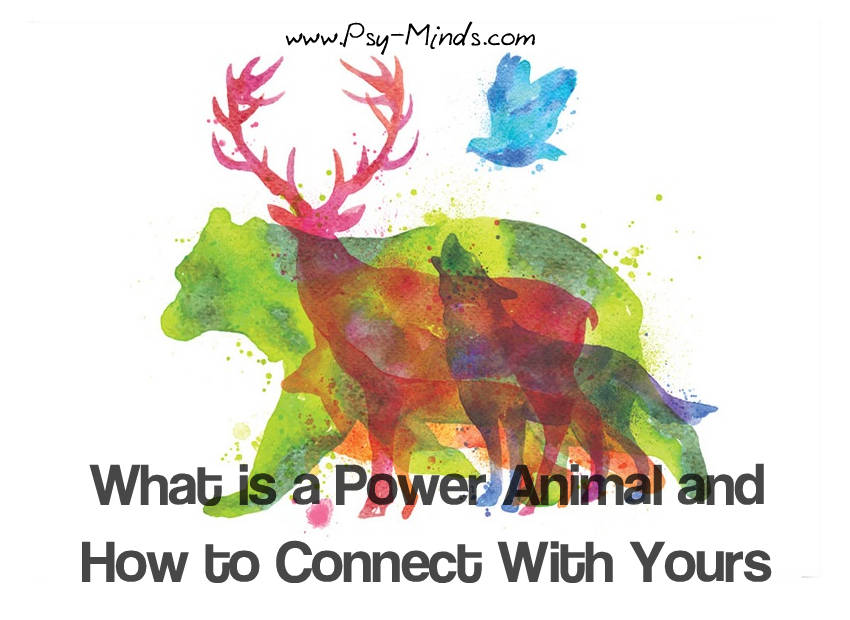 Power Animal How Connect With Yours