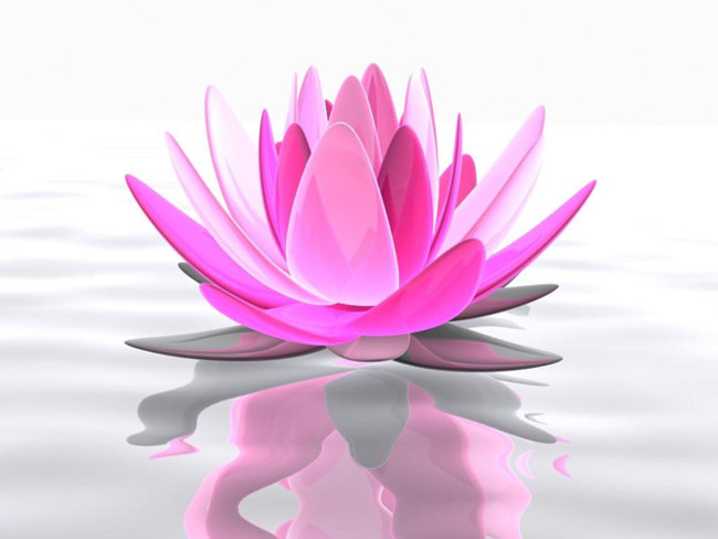 Lotus Flower Symbolism And Spiritual Meaning Psy Minds