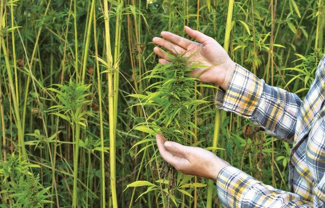 4 Ways The Hemp Plant Can Save the World 2