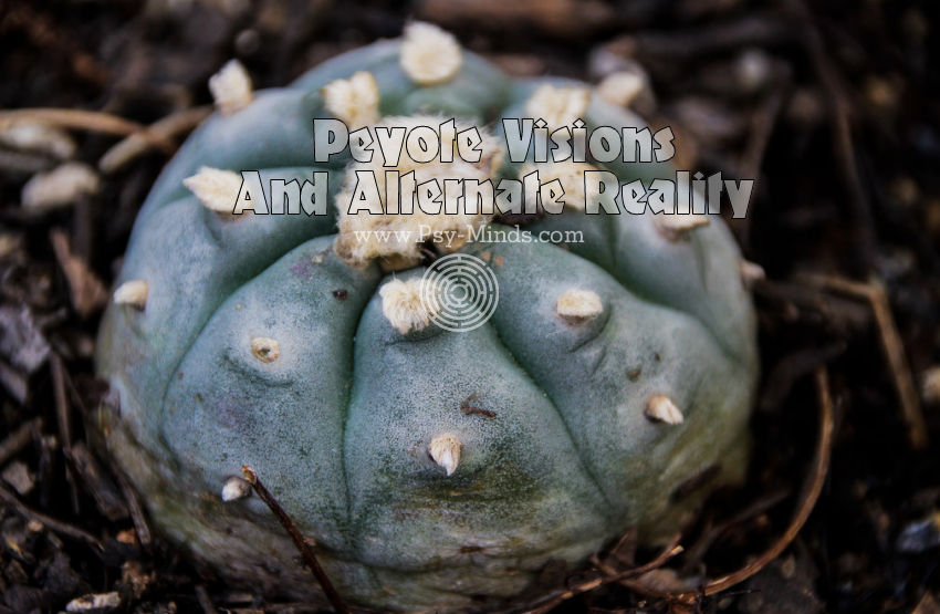 Peyote Visions Alternate Reality