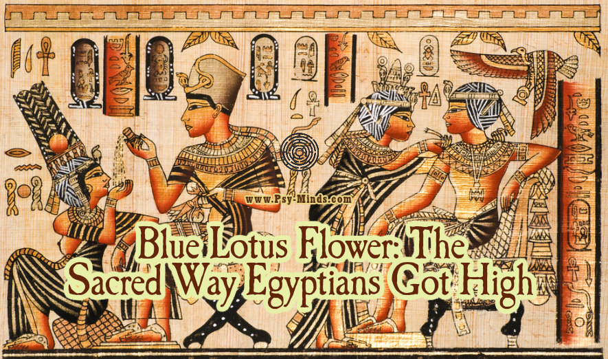 Blue lotus flower the sacred way egyptians got high psy minds blue lotus flower the sacred way egyptians got high mightylinksfo