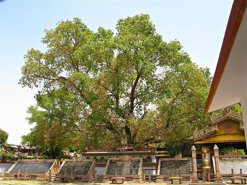 Bodh Gaya The City of Enlightenment1