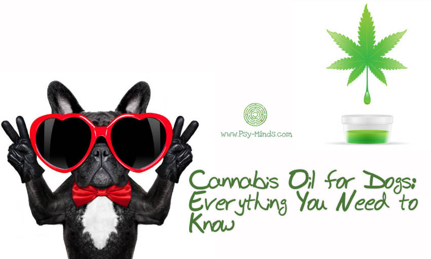 Cannabis Oil for Dogs Everything You Need to Know