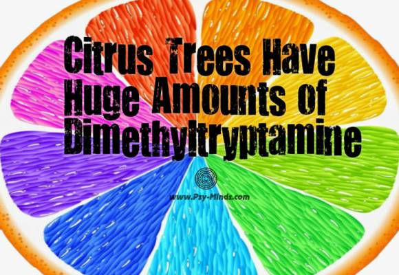 Citrus Trees Have Huge Amounts of Dimethyltryptamine