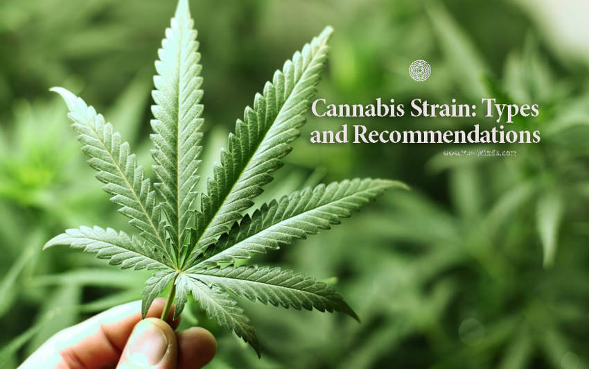 Cannabis Strain Types and Recommendations